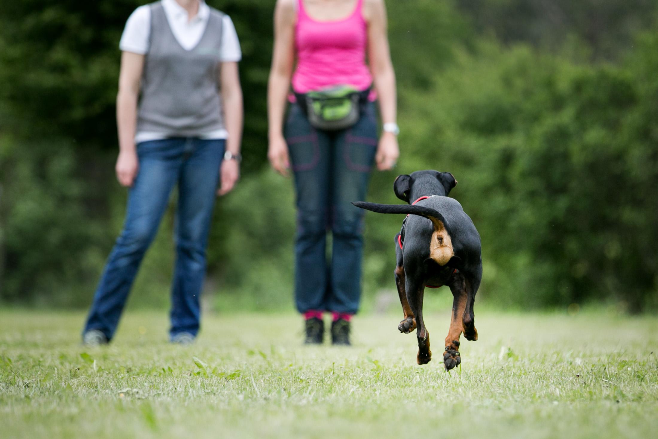 Rückruf Alltagstraining Hund Wien